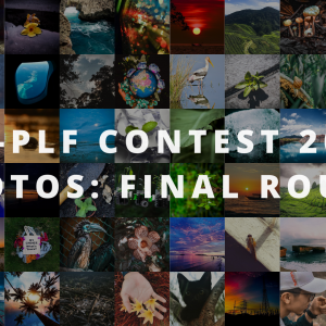 MF-PLF CONTEST 2020: PHOTO CATEGORY FINALIST